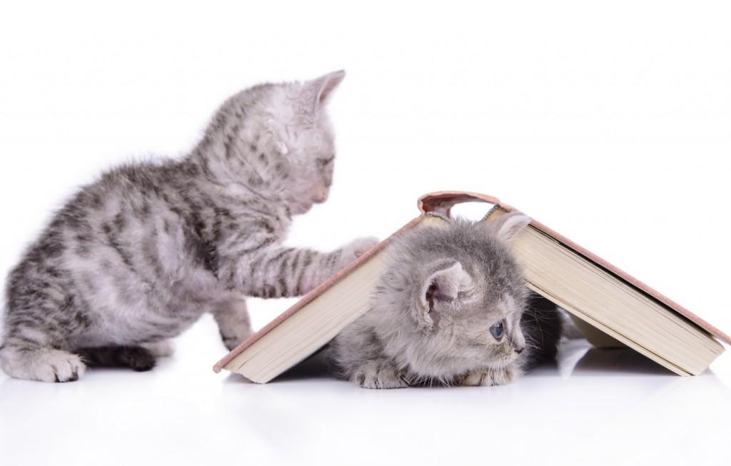 Кошка, книжка, я лучшие друзья